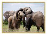 Poster von Elefant mit Hölzernem Bilderrahmen
